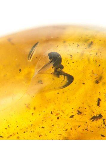 Natural Amber Stone With Inclusion, image , picture 6