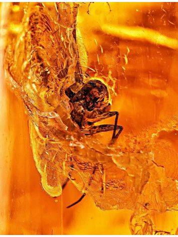 Amber Stone With Insect Inclusion, image , picture 2