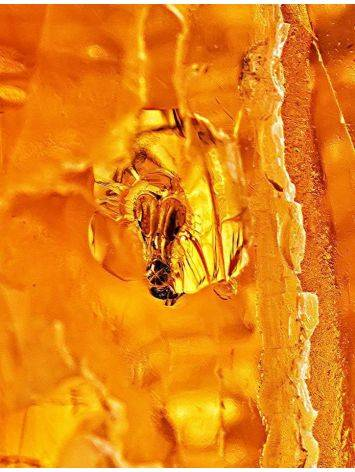 Amber Stone With Insect Inclusion, image , picture 6