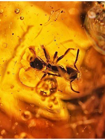 Natural Textured Amber Stone With Ant Inclusion, image , picture 2